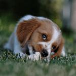 de verschillende huid- en vachtproblemen bij honden