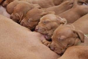 Waar moet je bij pasgeboren pups op letten?