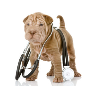 Dieetvoer voor honden