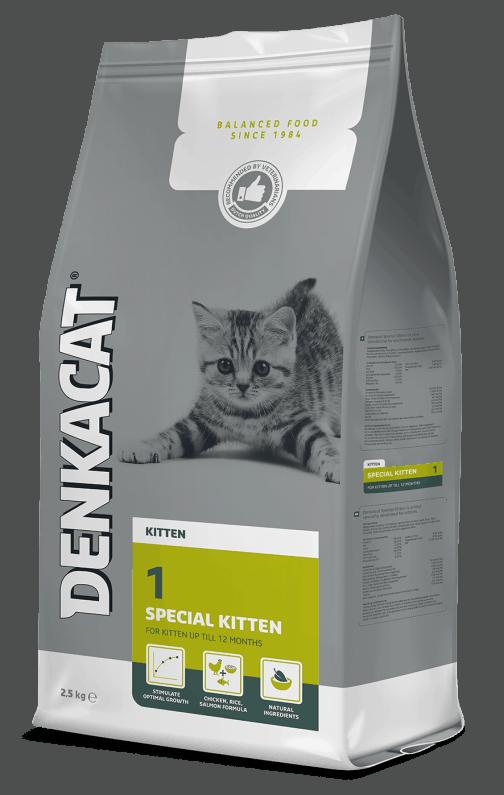 Denkacat Special Kitten